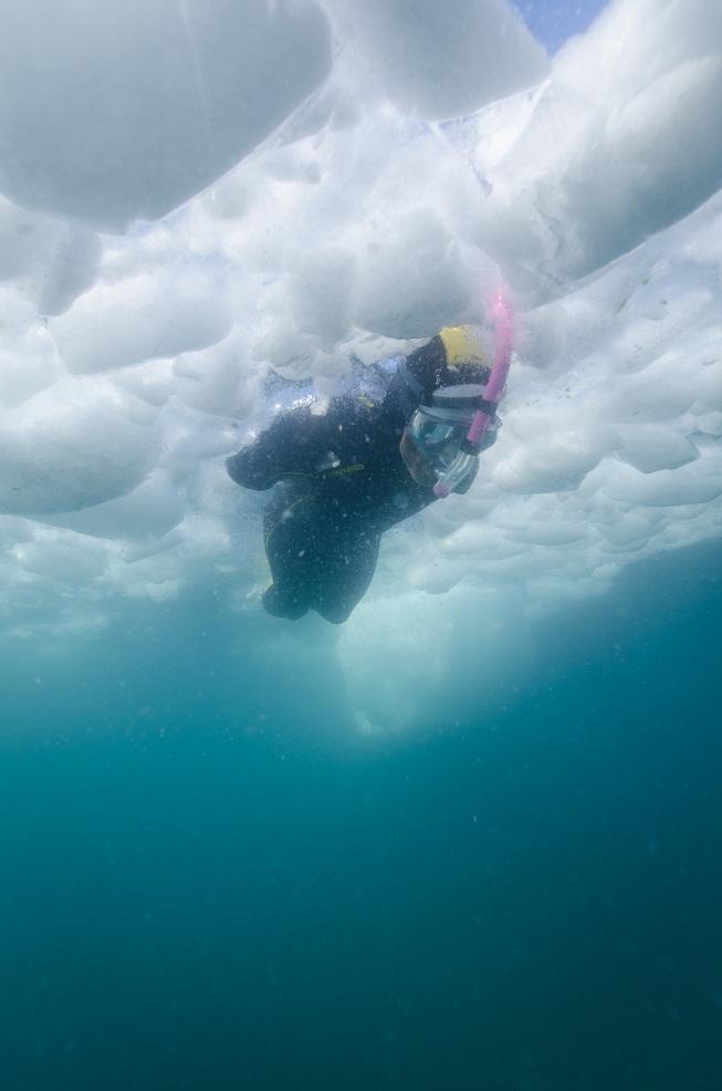 Dolfinu sous la glace.